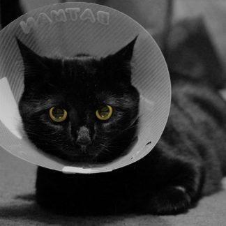 Herstellende katten