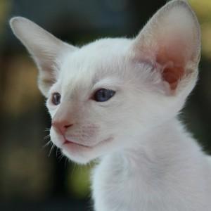 Kat Oren