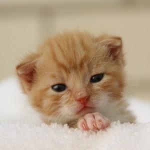 Pasgeboren kitten