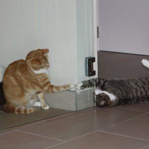 Speeltjes kat
